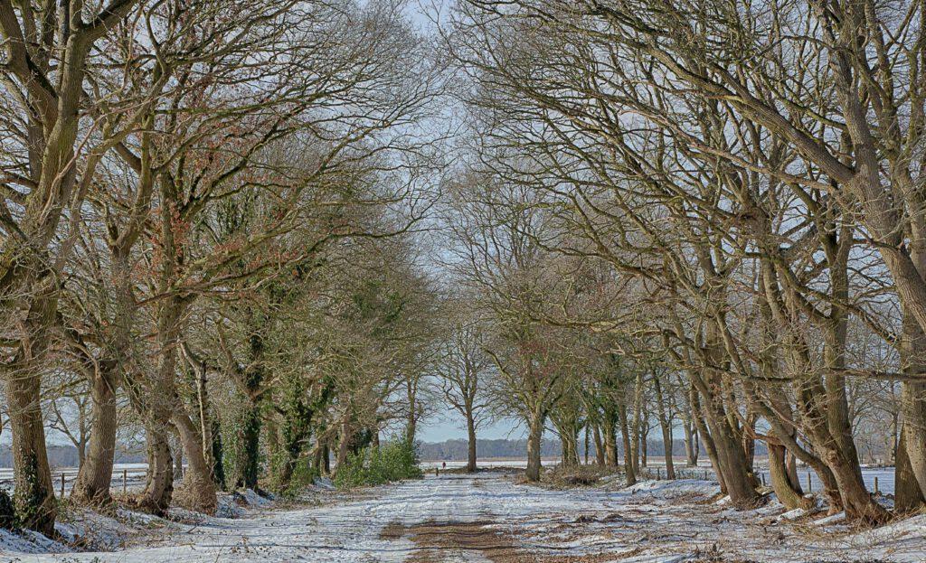 Winterlandschappen - Bomenrij-eexterveld-01-202102-kopie