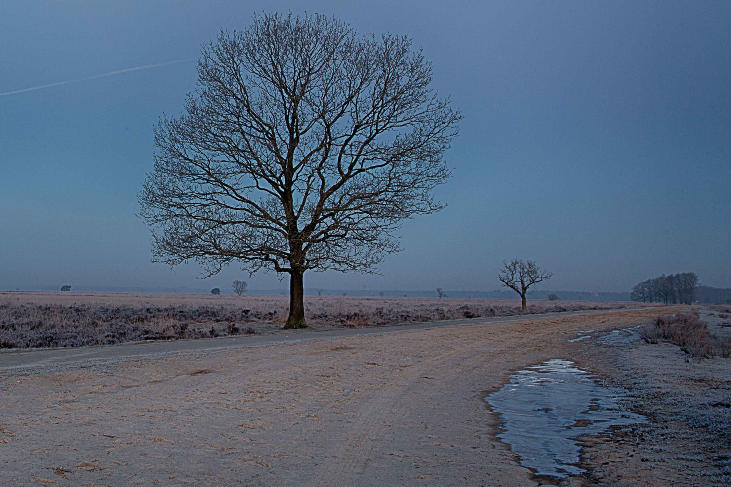 Winterlandschappen - dwingelderveld-01-202102-kopie