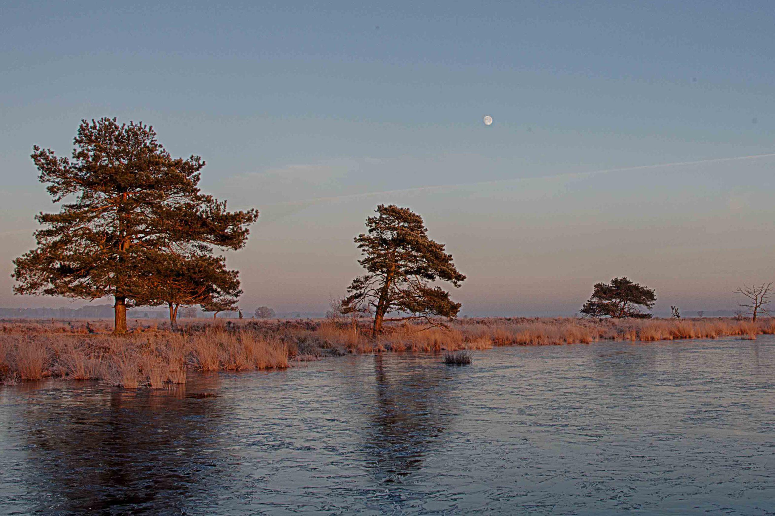 Winterlandschappen - dwingelderveld-02-202102-kopie