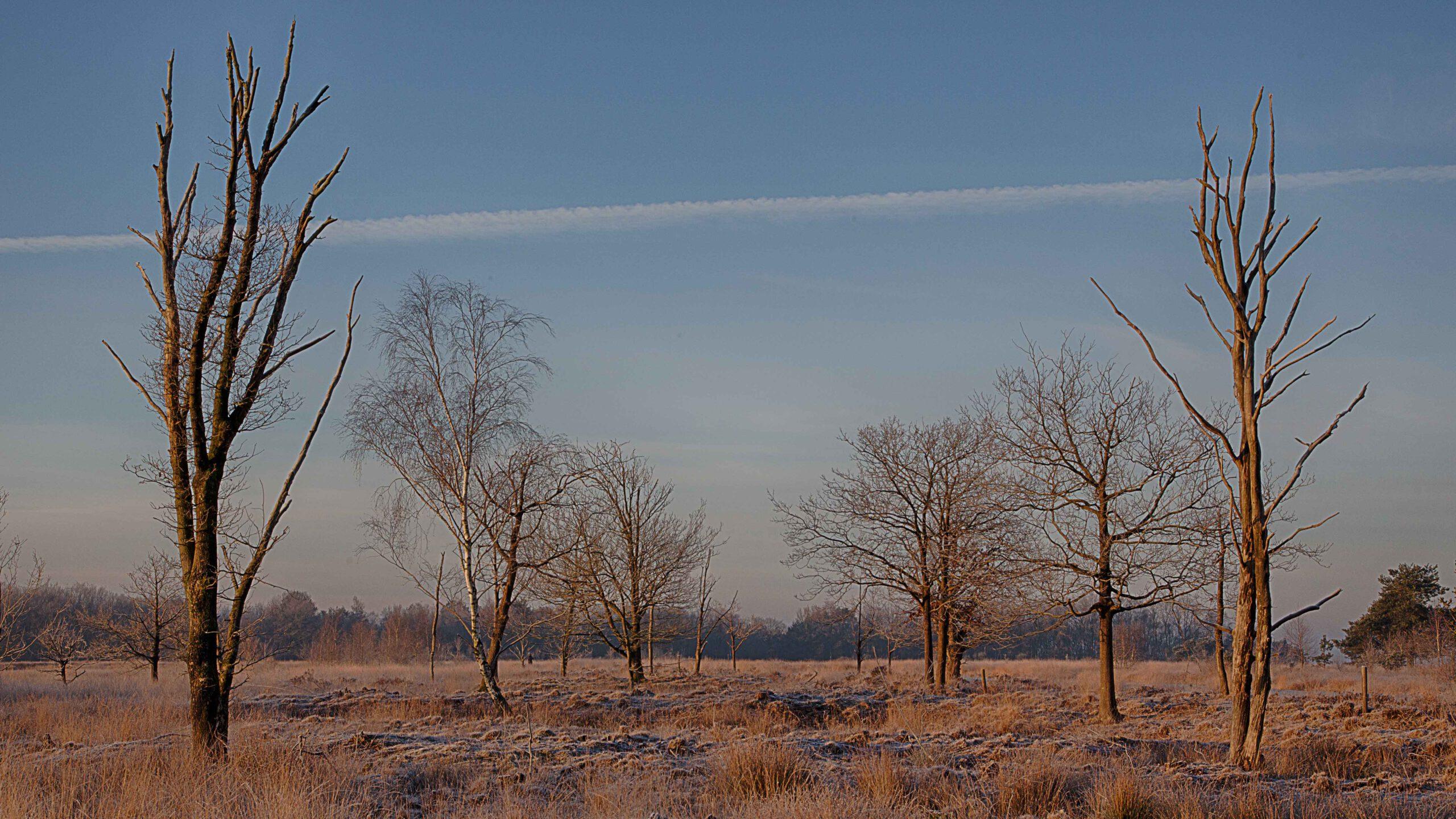 Winterlandschappen - dwingelderveld-07-202102-kopie
