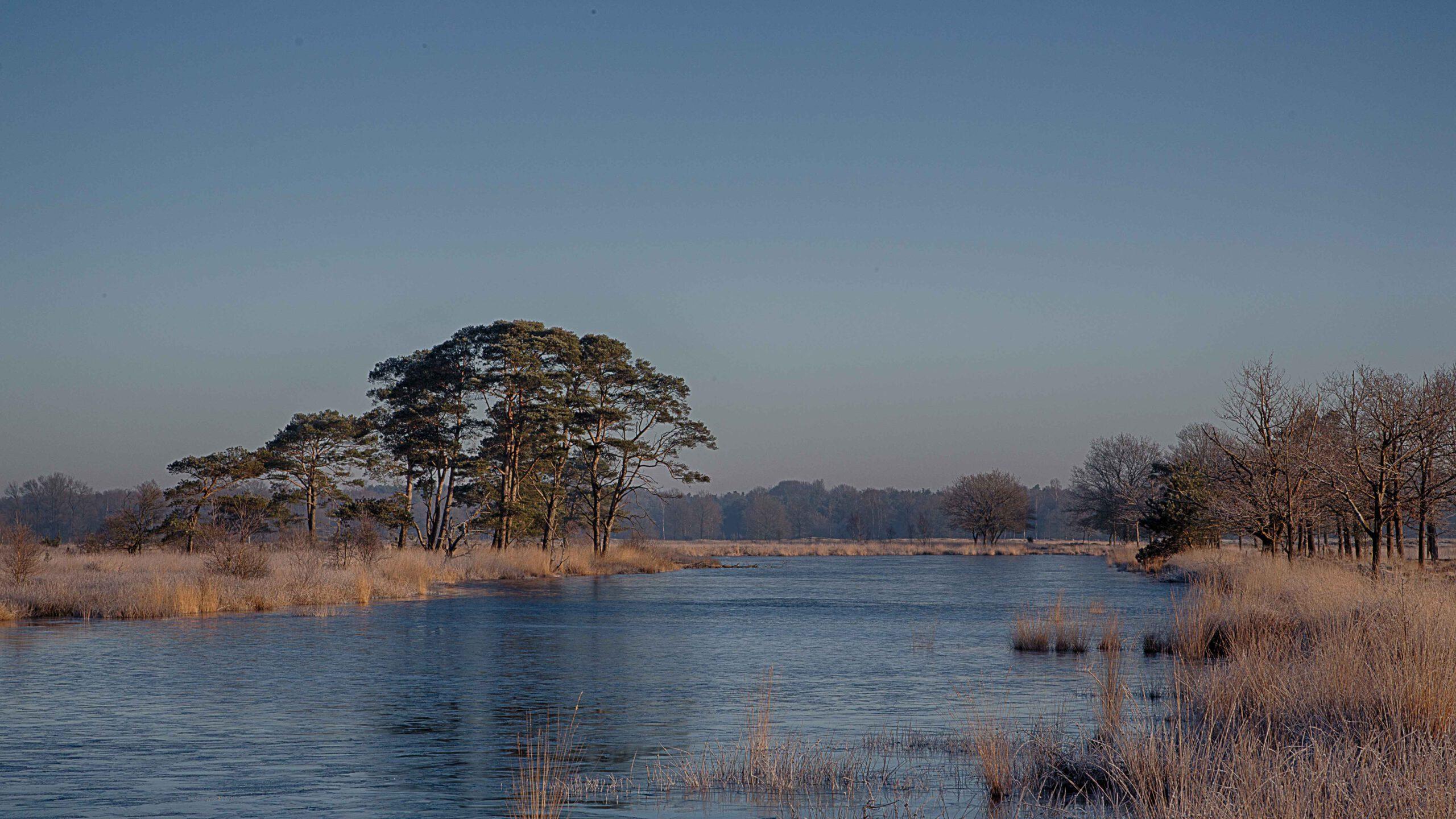 Winterlandschappen - dwingelderveld-08-202102-kopie