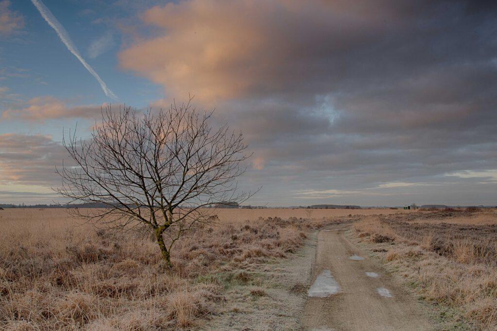Winterlandschappen - fochteloerveen-02-202101-kopie-Groot