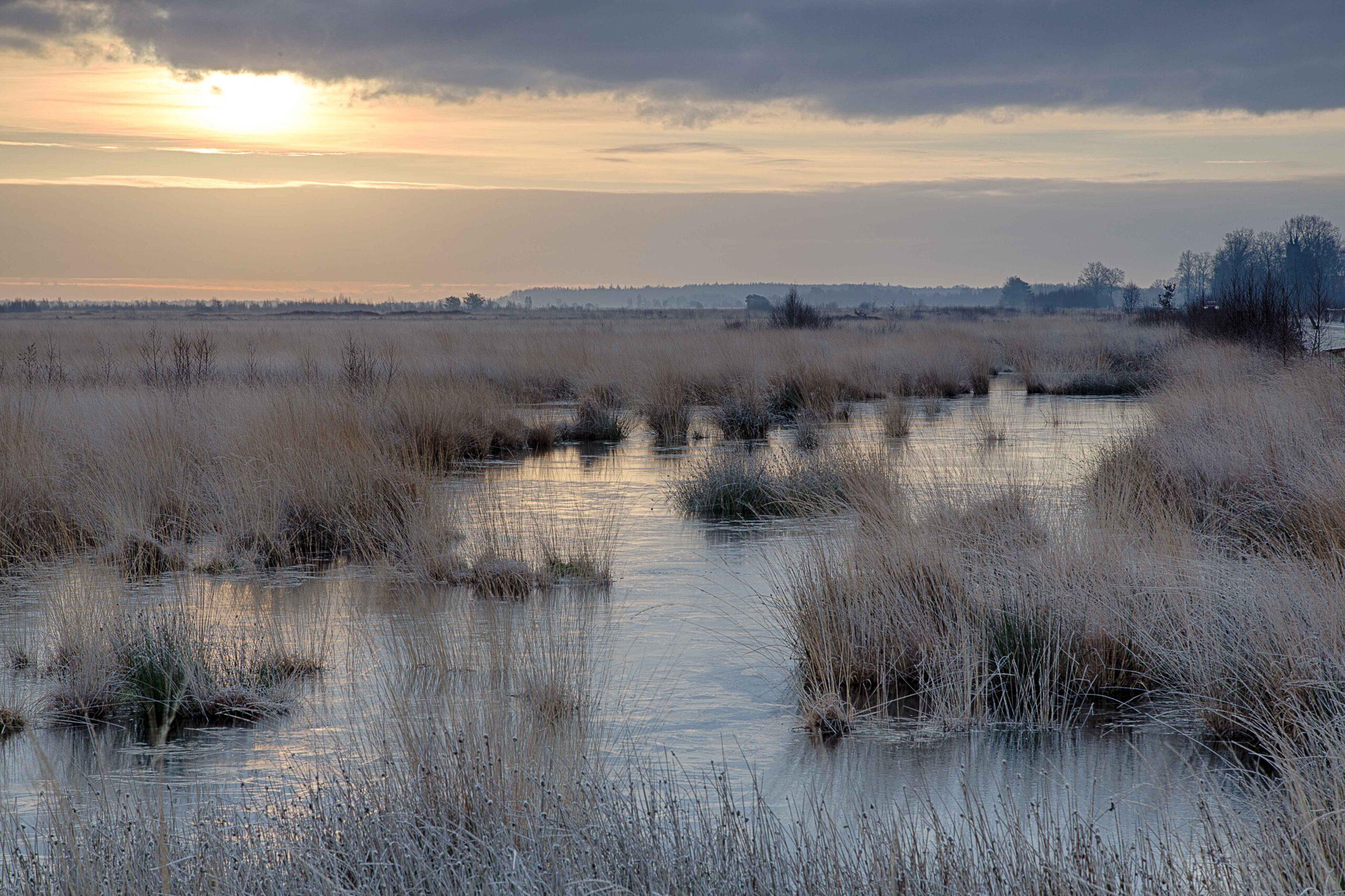 Winterlandschappen - fochteloerveen-05-202101-kopie