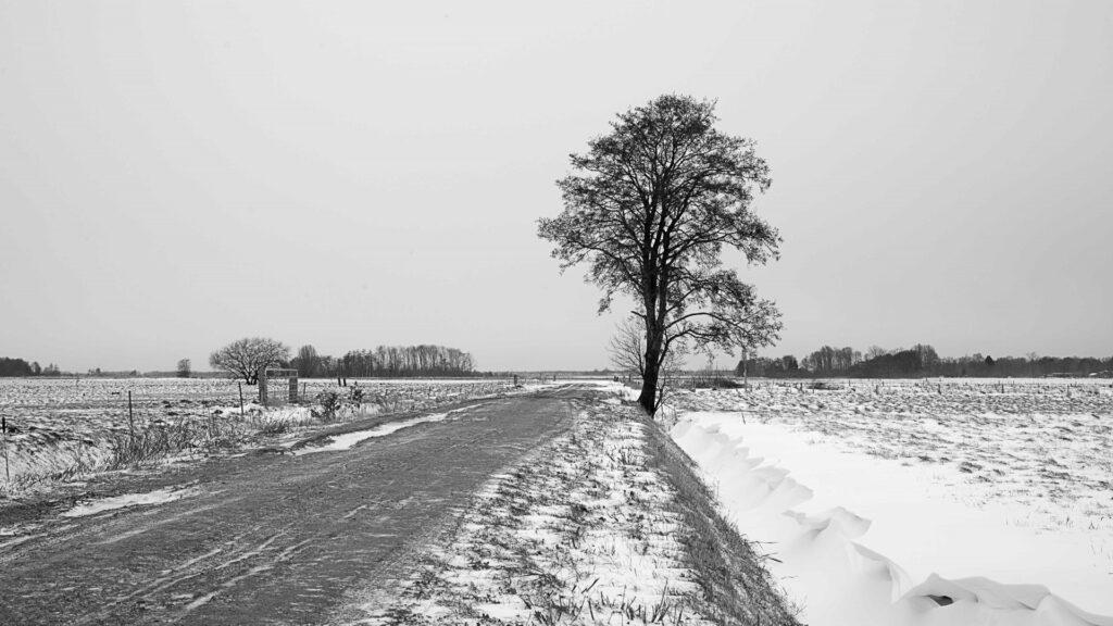 Winterlandschappen - kijkboerderij-eelde-02-202102-kopie-Groot