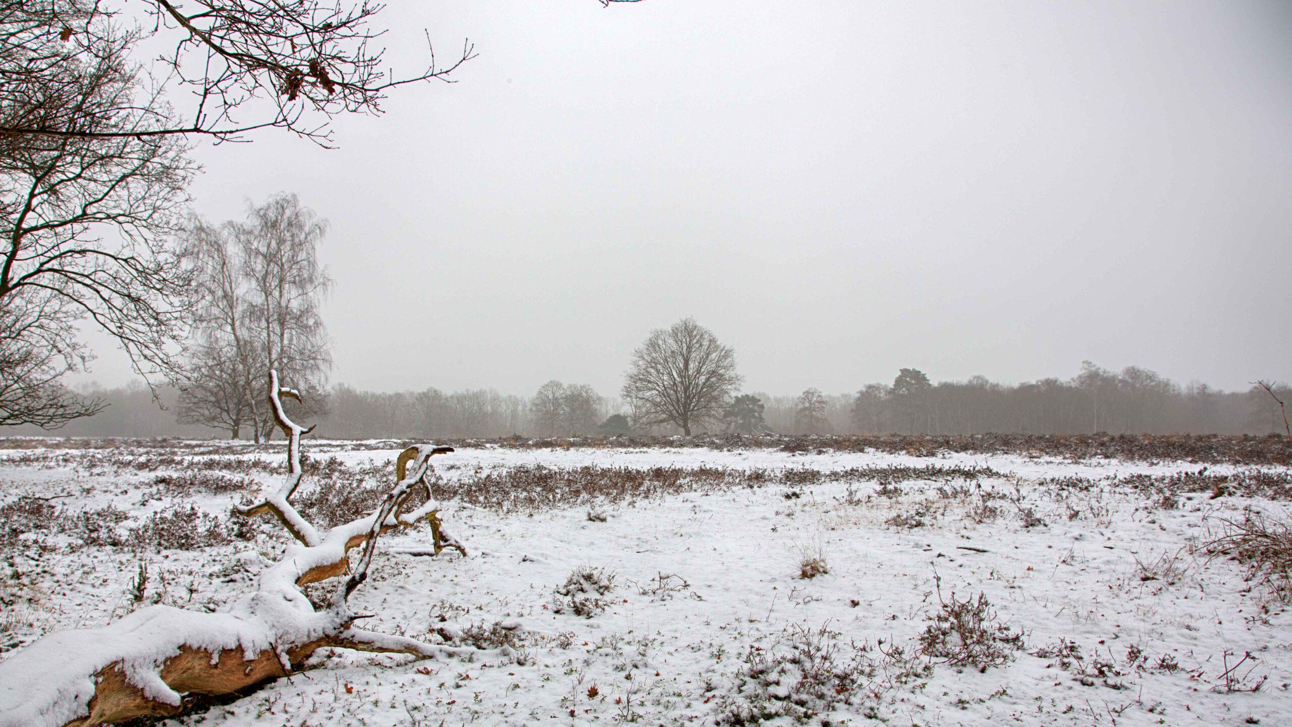 Winterlandschappen - kniphorsterbos-01-202101-kopie