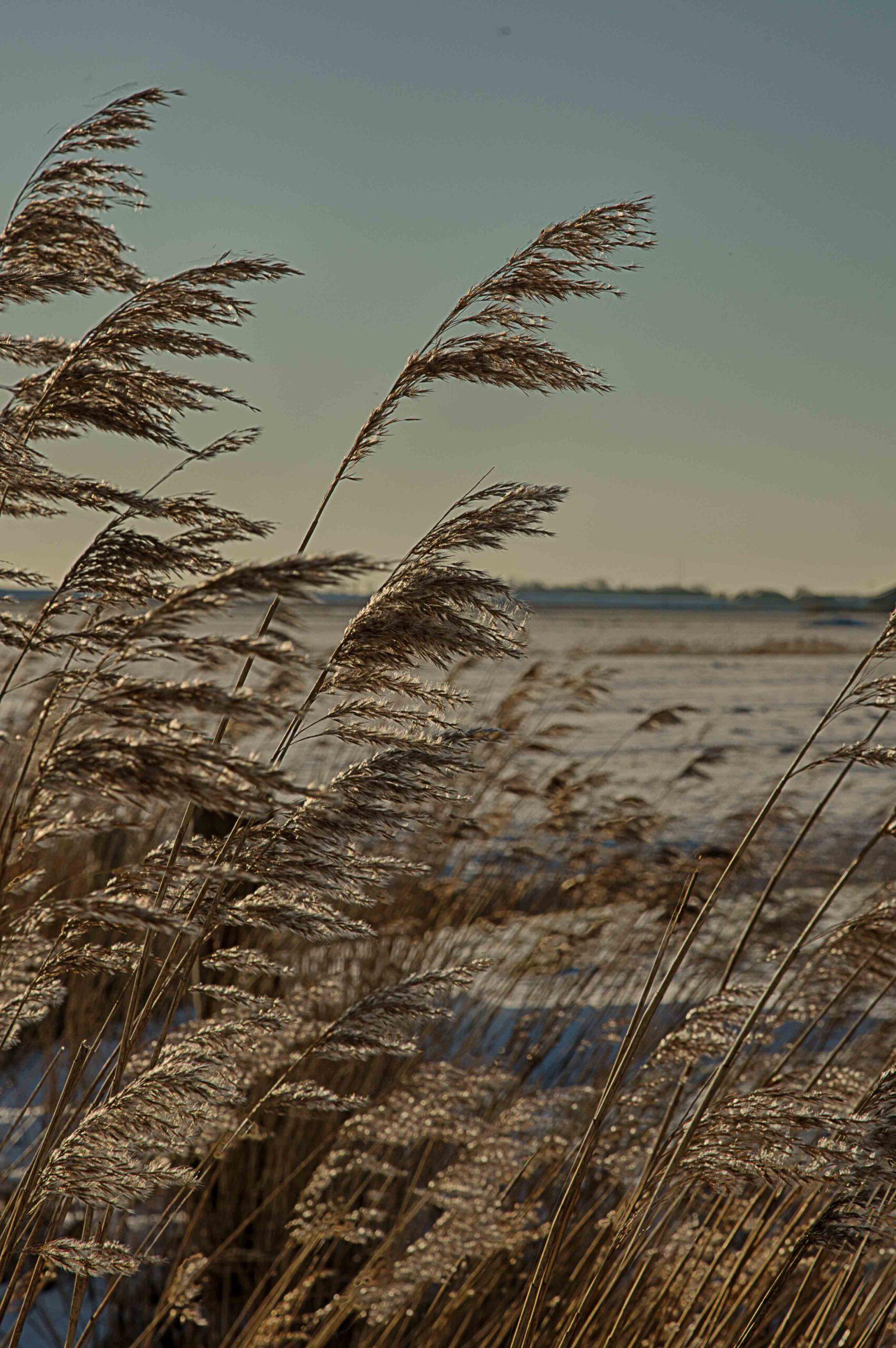 Winterlandschappen - lauwersoog-05-202102-kopie